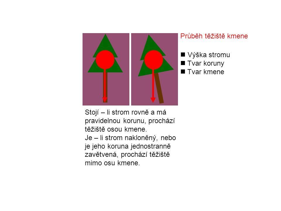 Stojí – li strom rovně a má pravidelnou korunu, prochází těžiště osou kmene.