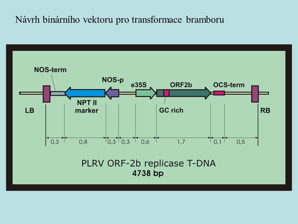 Návrh binárního vektoru pro transformace bramboru
