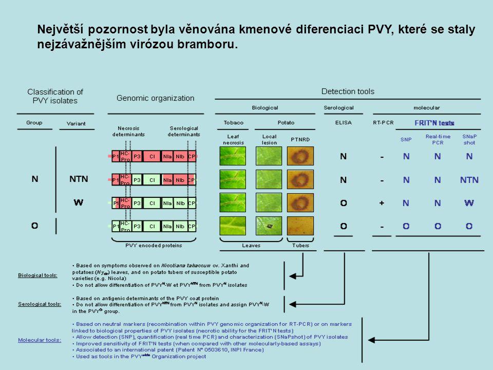 Největší pozornost byla věnována kmenové diferenciaci PVY, které se staly nejzávažnějším virózou bramboru.