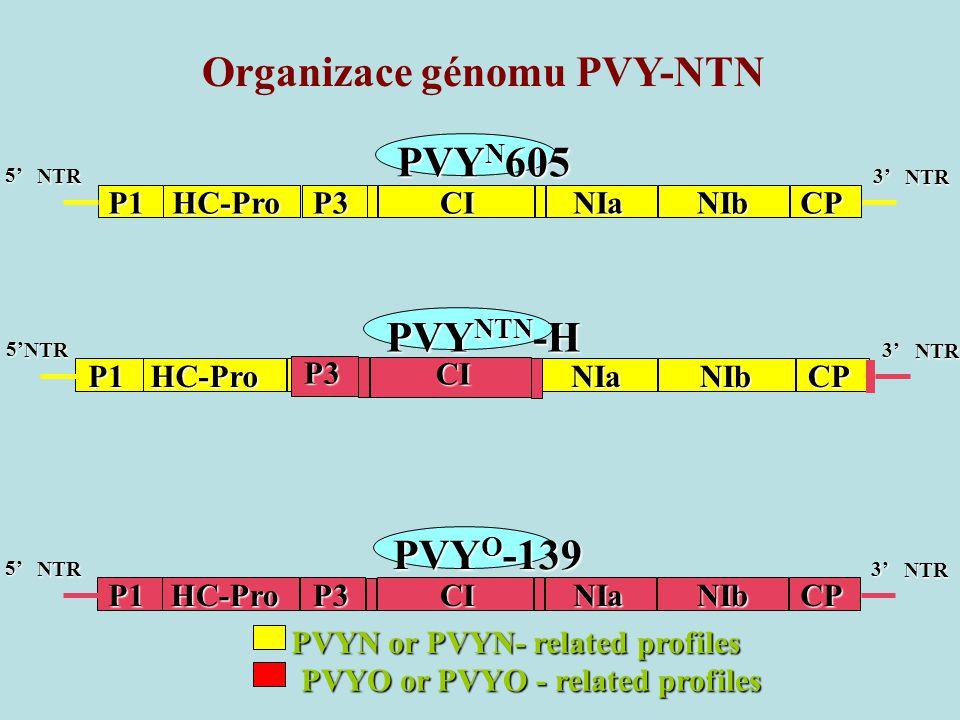 Organizace génomu PVY-NTN PVY N 605 P1HC-ProP3CINIaNIbCP 3' NTR 5' NTR P1HC-ProP3CINIaNIbCP 3' NTR PVY O -139 5' NTR P1HC-ProP3CINIaNIbCP 3' NTR PVY NTN -H 5' 5' NTR NTR PVYN or PVYN- related profiles PVYO or PVYO - related profiles CIP3