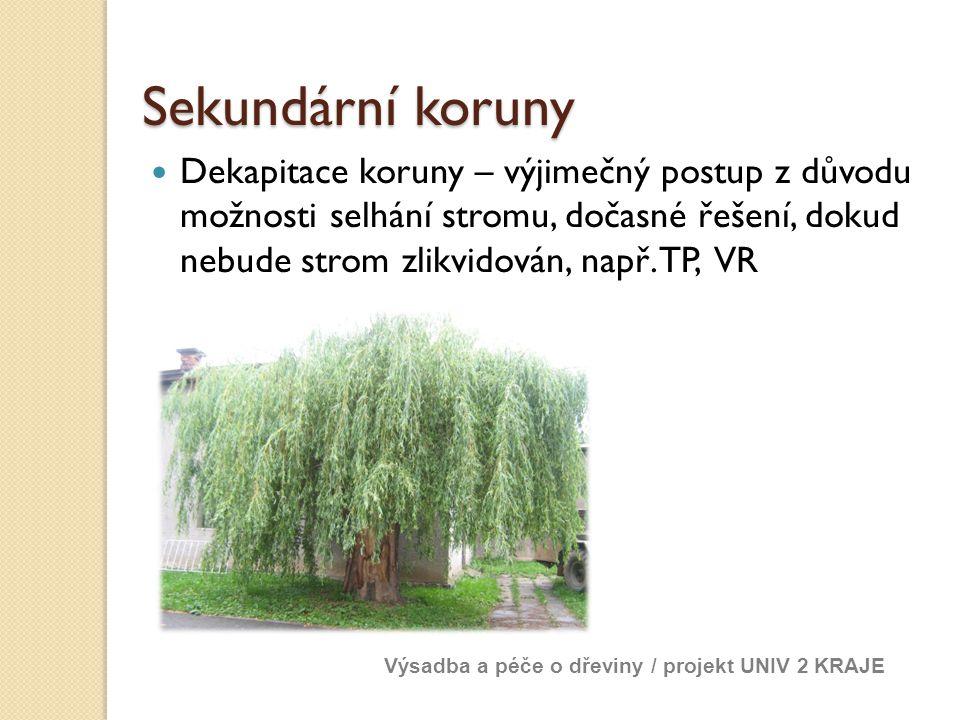 Sekundární koruny Dekapitace koruny – výjimečný postup z důvodu možnosti selhání stromu, dočasné řešení, dokud nebude strom zlikvidován, např. TP, VR