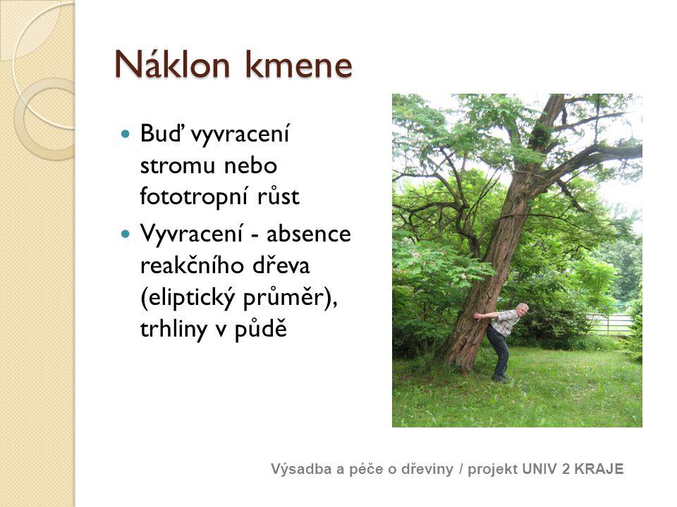 Náklon kmene Buď vyvracení stromu nebo fototropní růst Vyvracení - absence reakčního dřeva (eliptický průměr), trhliny v půdě Výsadba a péče o dřeviny