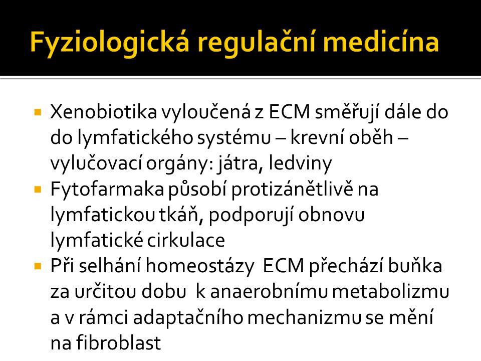  Xenobiotika vyloučená z ECM směřují dále do do lymfatického systému – krevní oběh – vylučovací orgány: játra, ledviny  Fytofarmaka působí protizánětlivě na lymfatickou tkáň, podporují obnovu lymfatické cirkulace  Při selhání homeostázy ECM přechází buňka za určitou dobu k anaerobnímu metabolizmu a v rámci adaptačního mechanizmu se mění na fibroblast