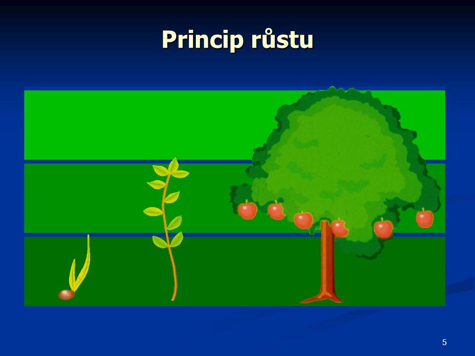 5 Princip růstu
