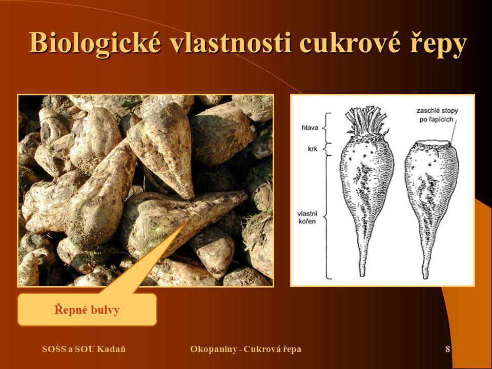 SOŠS a SOU KadaňOkopaniny - Cukrová řepa19 Setí cukrové řepy  Obal obsahuje fungicidy a insekticidy a je obarven pro lepší kontrolu v půdě.
