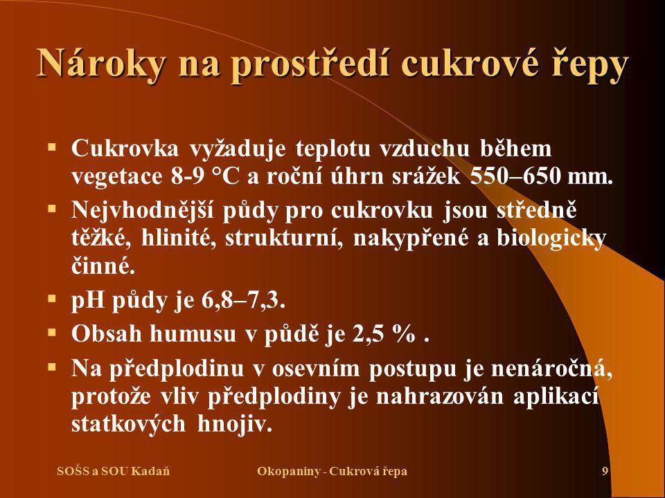 SOŠS a SOU KadaňOkopaniny - Cukrová řepa20 Dva způsoby založení porostu:  Výsev jednoklíčkového osiva na konečnou vzdálenost 16–24 cm.