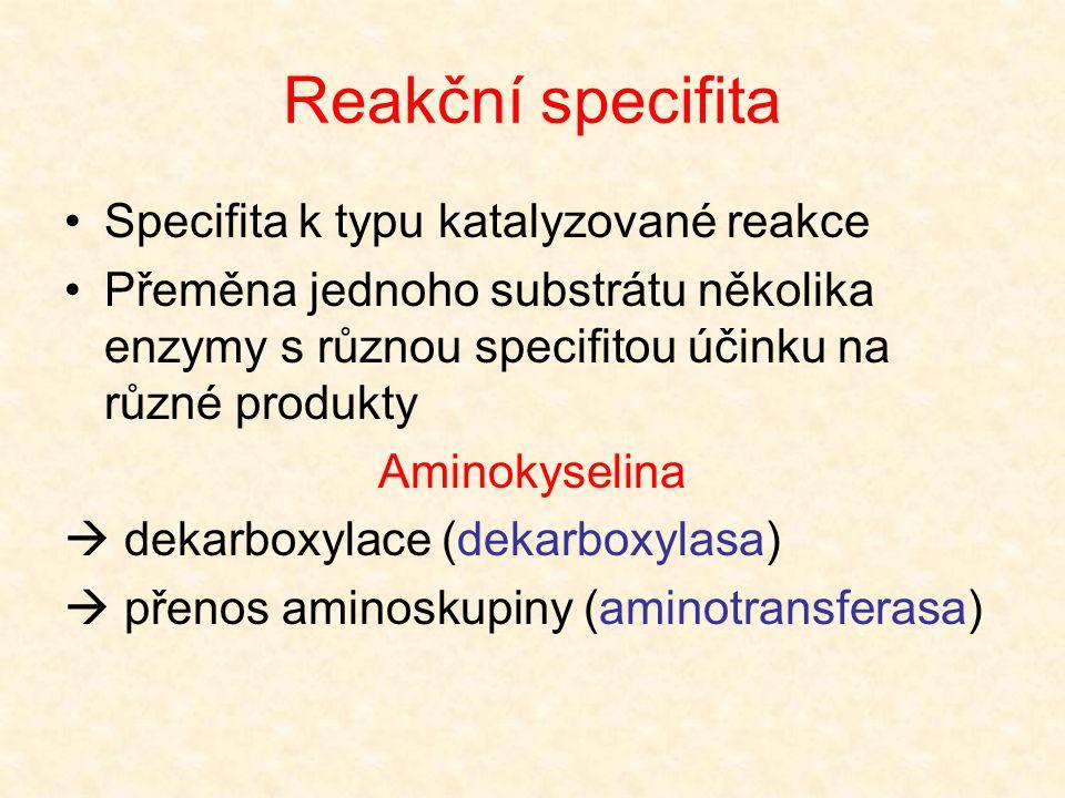 Strukturní specifita Absolutní specifita [přeměna jediného substrátu; ureasa (močovina); aspartasa (aspartát  fumarát)] Skupinová specifita [přeměna