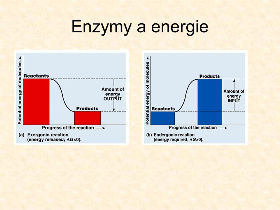 Enzymy a energie Chemické reakce mohou být klasifikovány podle energetického průběhu:  Exergonické reakce (přeměny z nestálého stavu o vyšší chemické