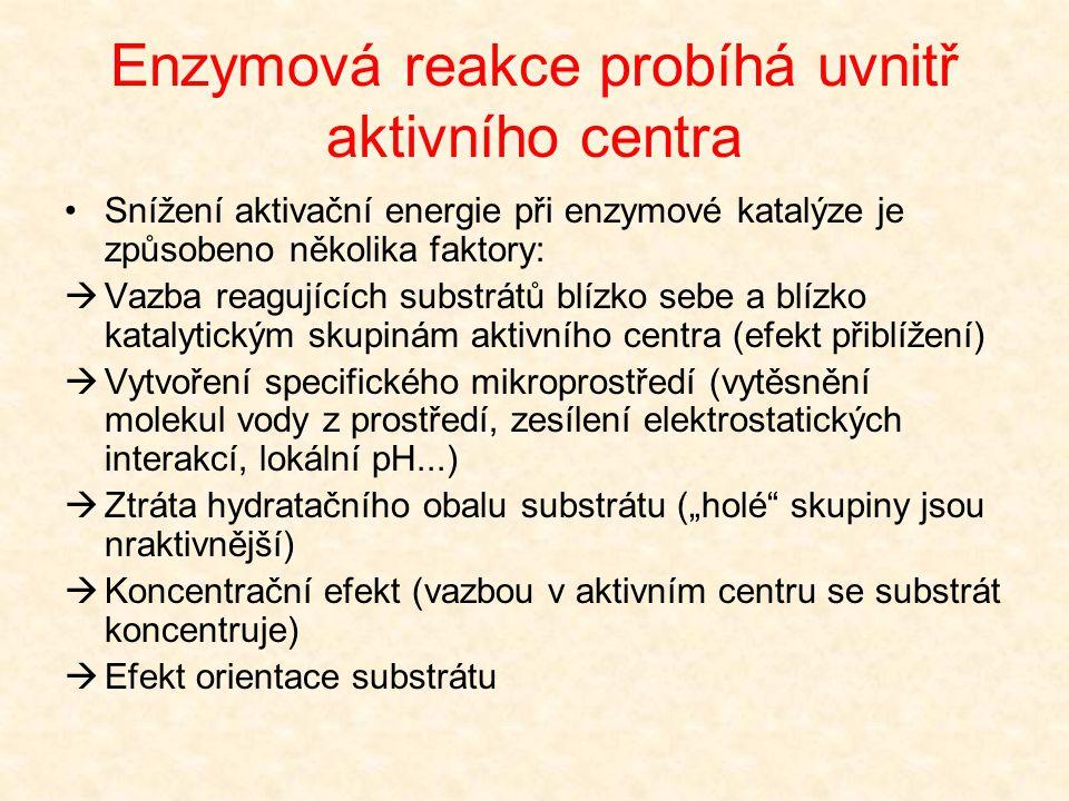 Urychlení reakce Enzymy urychlují reakce snížením aktivační energie E A.  Přechodový stav může být dosažen při fysiologických teplotách Enzymy nemění