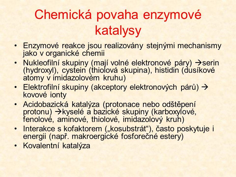Chemická povaha enzymové katalysy Dva základní typy chemické katalýzy  Homogenní (např. kyseliny, báze)  Heterogenní (katalytické povrchy) Enzymová