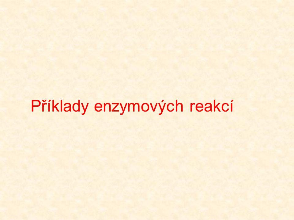 Histidin pK cca 6  při fysiologickém pH imidazolový kruh může fungovat jako donor i akceptor protonů Imidazolový kruh zároveň působí jako nukleofil H