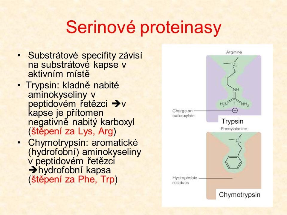 Serinové proteinasy Molekuly trypsinu a chymotrypsinu jsou velmi podobné Polypeptidové substráty se váží podobným způsobem Rozdíl v oblasti pro vazbu