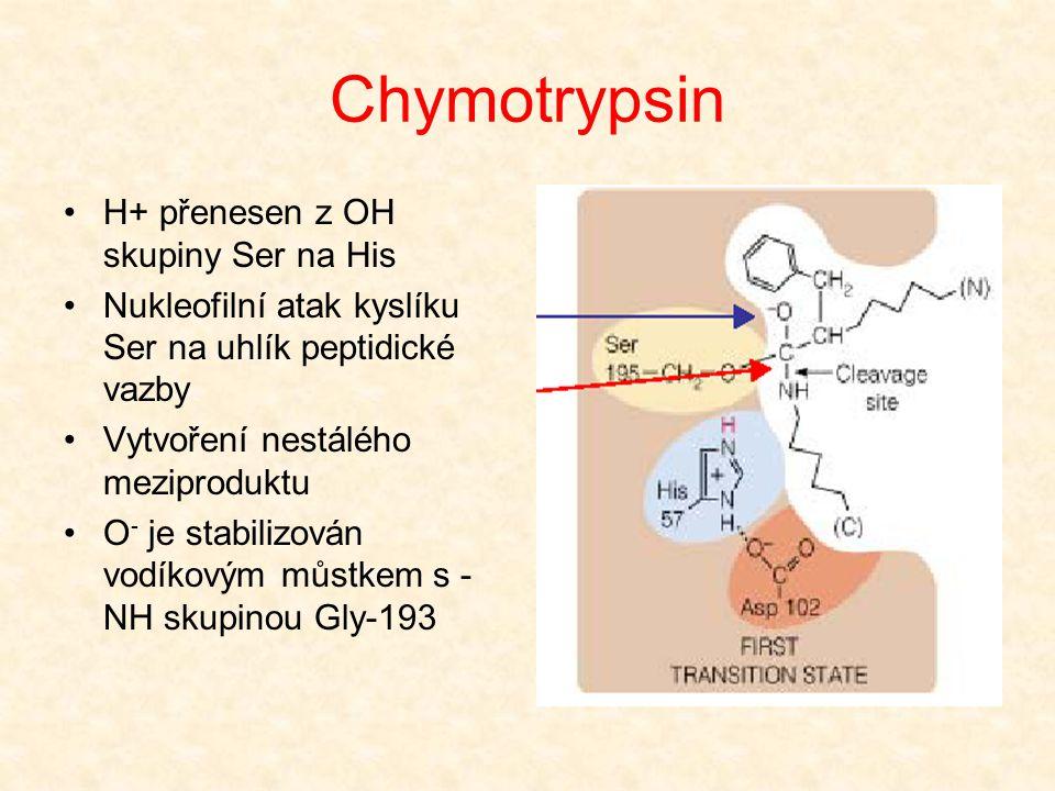 Chymotrypsin Štěpený polypeptid se váže do aktivního centra Postranní řetězec aminokyseliny podílející se na štěpené vazbě (Phe, Trp) se váže do hydro