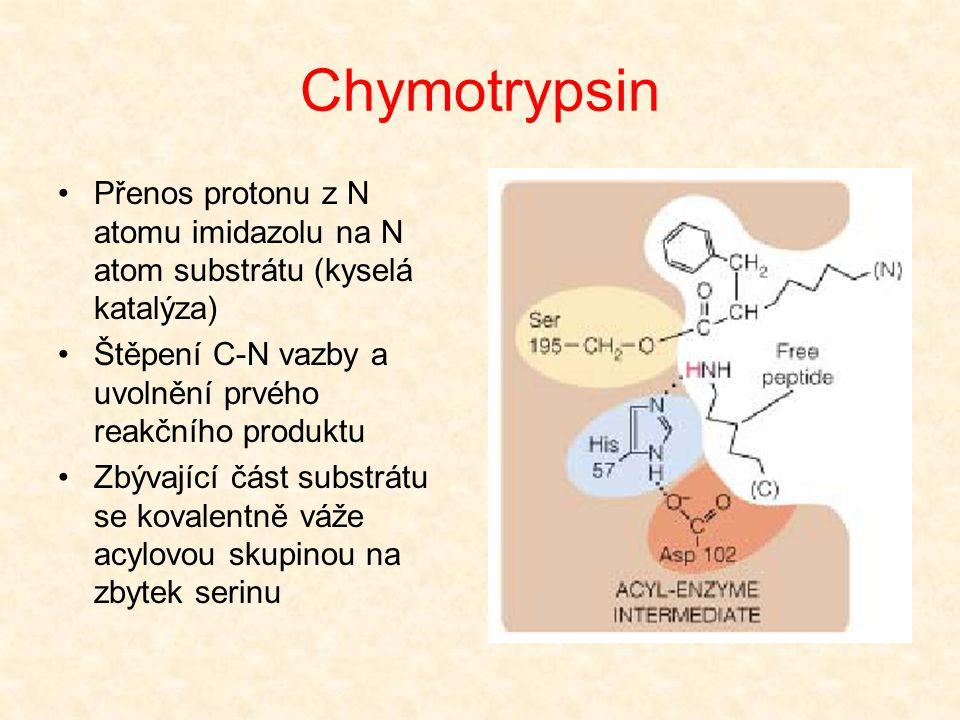 Chymotrypsin H+ přenesen z OH skupiny Ser na His Nukleofilní atak kyslíku Ser na uhlík peptidické vazby Vytvoření nestálého meziproduktu O - je stabil