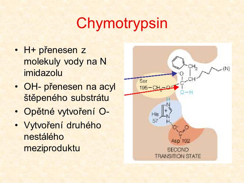 Chymotrypsin Nukleofilní atak molekuly vody (proton tvoří vodíkovou vazbu s N imidazolu a kyslíkem serinu; OH- se bude vázat na acyl štěpeného substrá