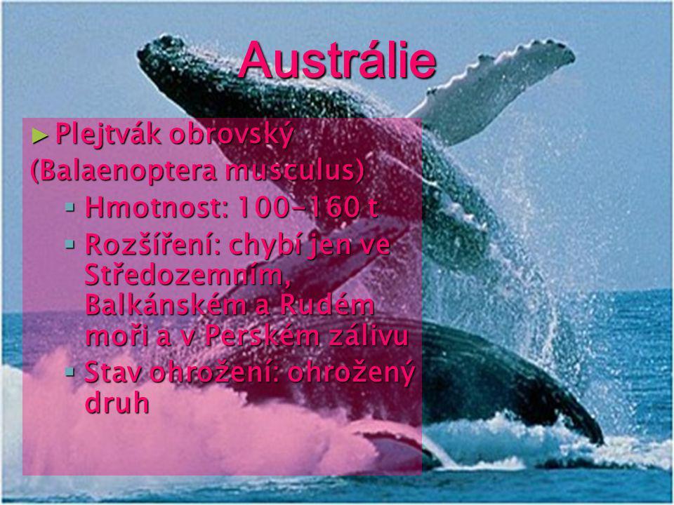 Antarktida ► Tuleň (Lobodon carcinophagus)  Hmotnost: 220kg  Rozšíření: antarktické a subantarktické vody  Stav ohrožení:ohrožený druh