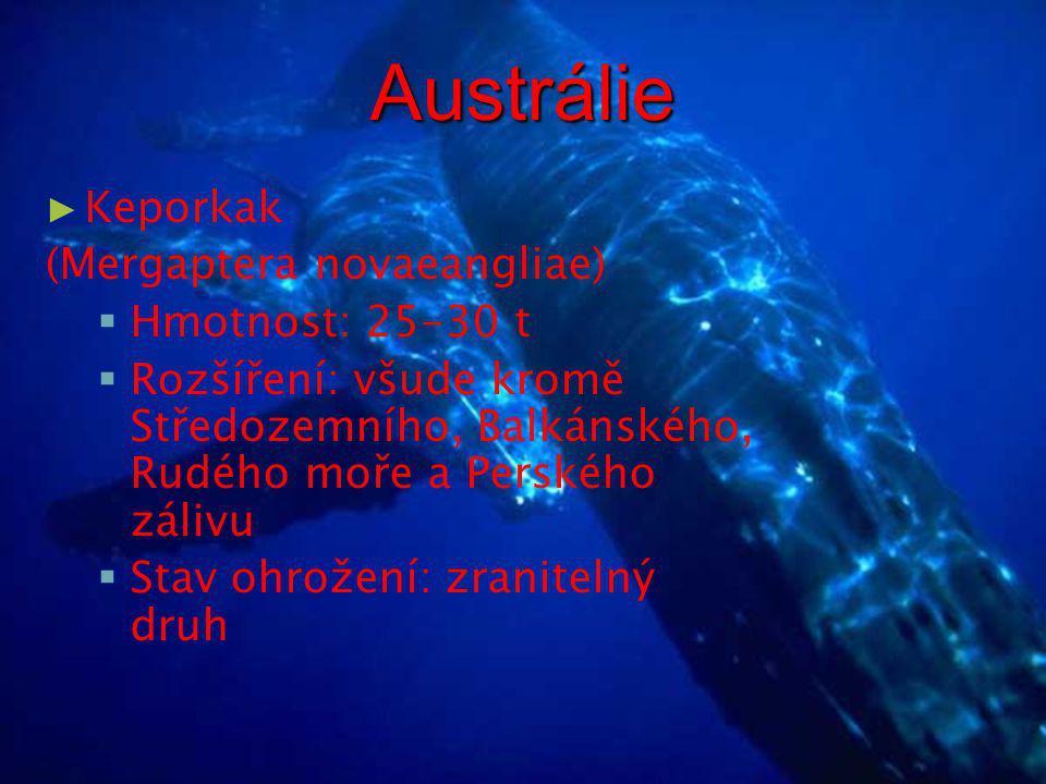 Austrálie ► Plejtvák obrovský (Balaenoptera musculus)  Hmotnost: 100-160 t  Rozšíření: chybí jen ve Středozemním, Balkánském a Rudém moři a v Perském zálivu  Stav ohrožení: ohrožený druh