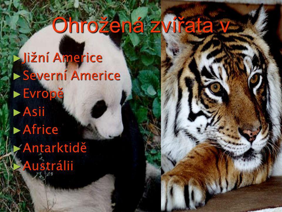 Ohrožená zvířata v ► Jižní Americe ► Severní Americe ► Evropě ► Asii ► Africe ► Antarktidě ► Austrálii