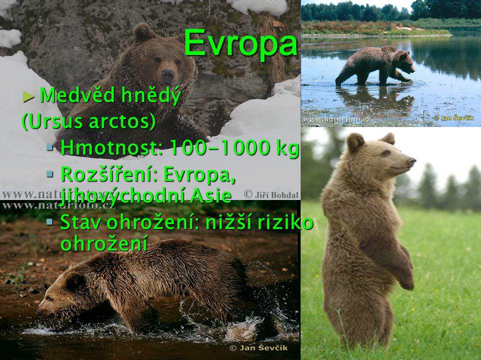 Evropa ► Medvěd hnědý (Ursus arctos)  Hmotnost: 100-1000 kg  Rozšíření: Evropa, jihovýchodní Asie  Stav ohrožení: nižší riziko ohrožení