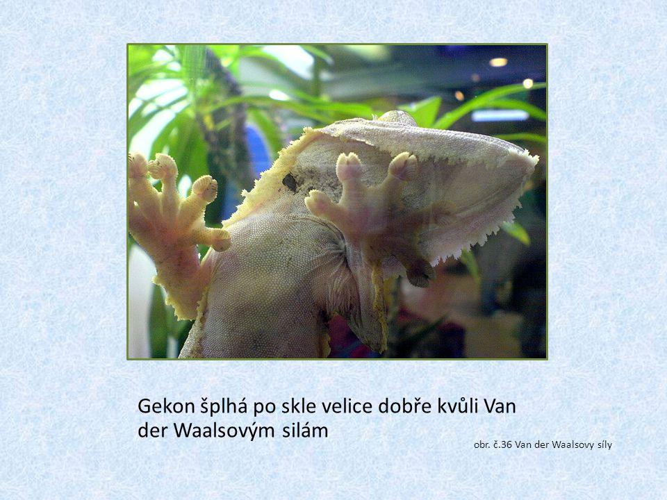 Gekon šplhá po skle velice dobře kvůli Van der Waalsovým silám obr. č.36 Van der Waalsovy síly