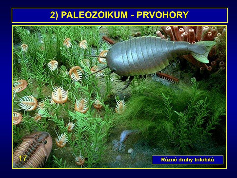 2) PALEOZOIKUM - PRVOHORY Různé druhy trilobitů 17