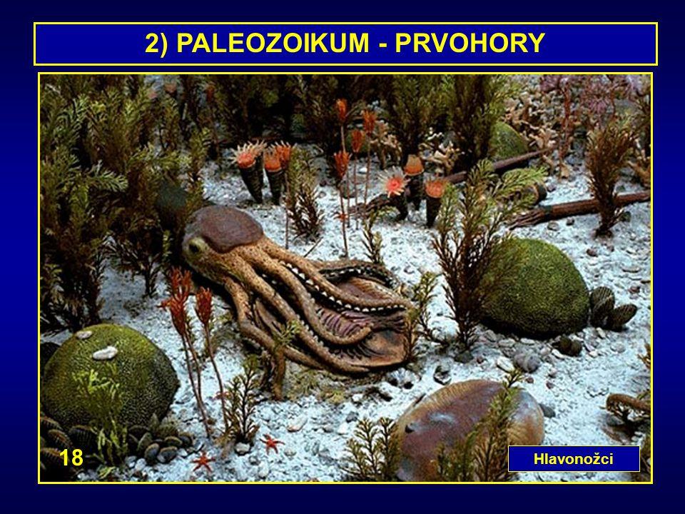2) PALEOZOIKUM - PRVOHORY Hlavonožci 18