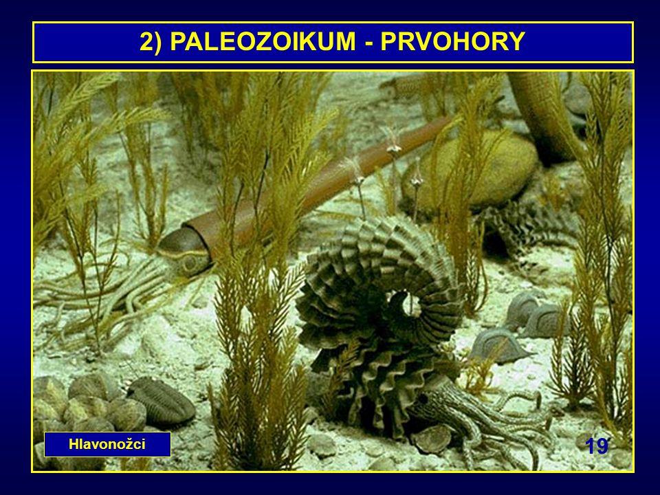 2) PALEOZOIKUM - PRVOHORY Hlavonožci 19