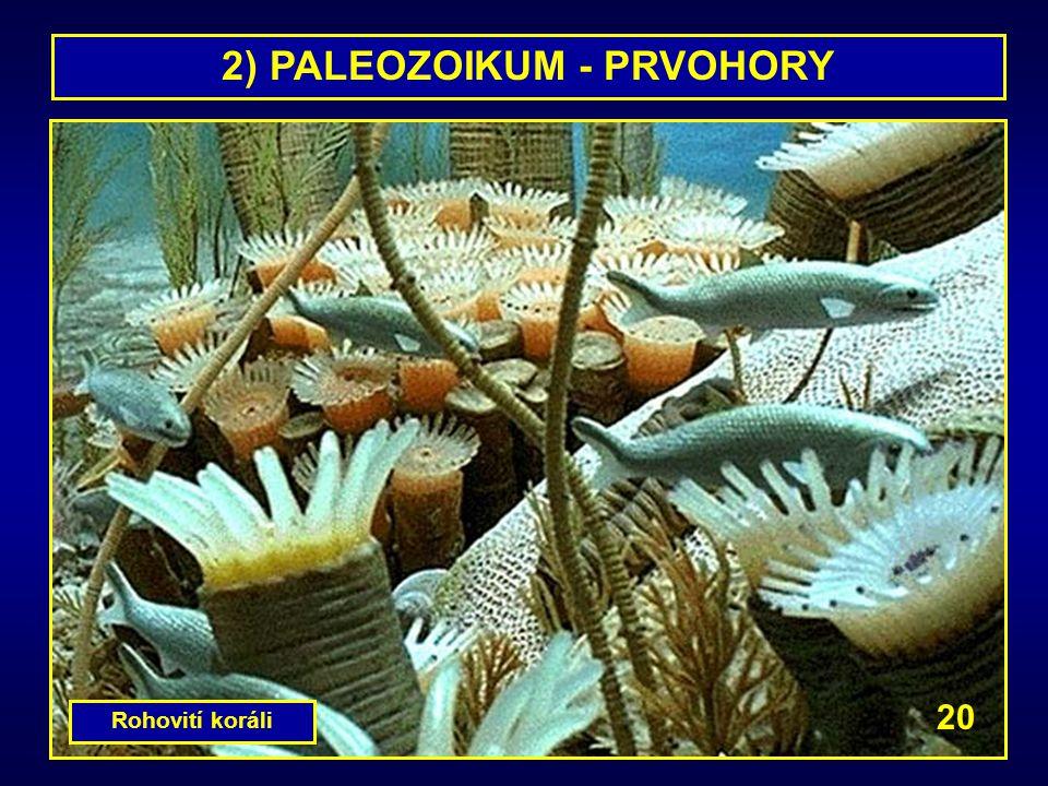 2) PALEOZOIKUM - PRVOHORY Rohovití koráli 20