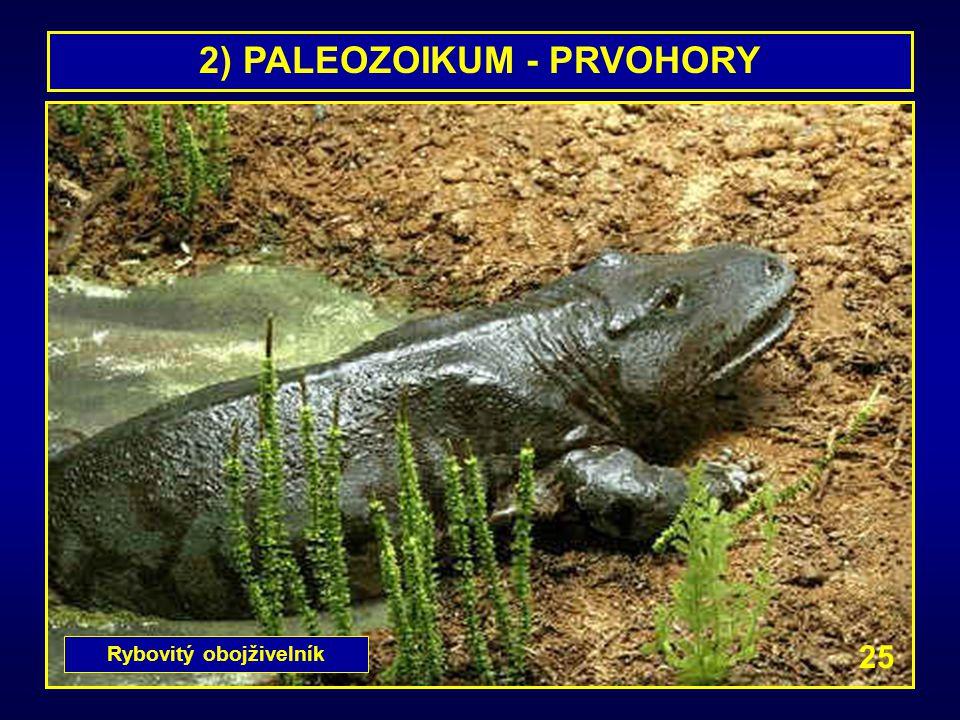 2) PALEOZOIKUM - PRVOHORY Rybovitý obojživelník 25