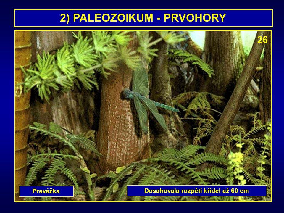 2) PALEOZOIKUM - PRVOHORY Pravážka Dosahovala rozpětí křídel až 60 cm 26