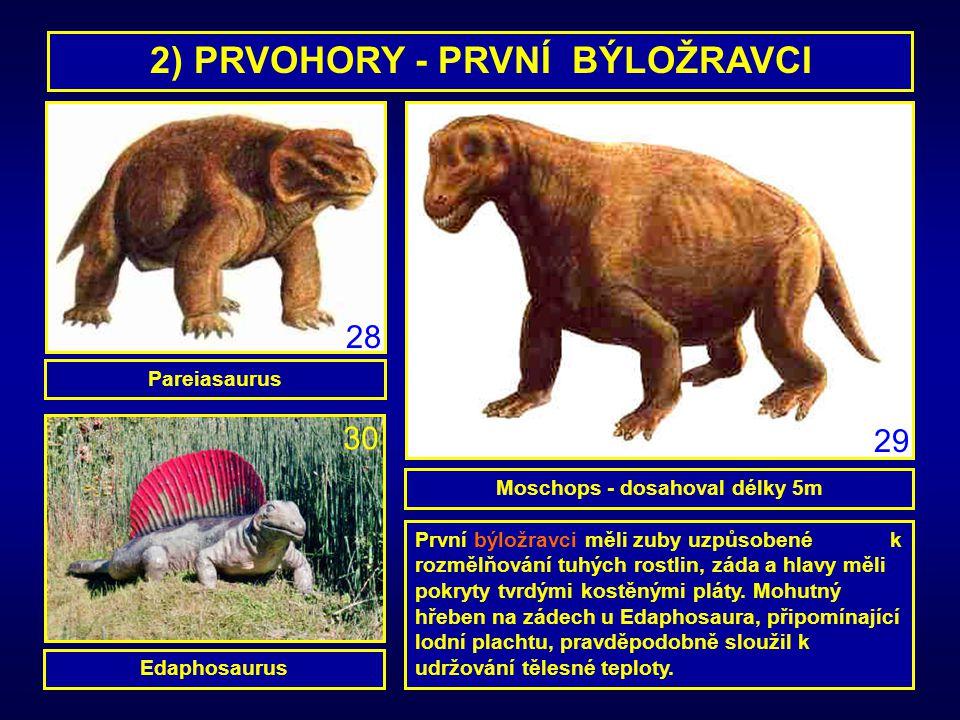 2) PRVOHORY - PRVNÍ BÝLOŽRAVCI Pareiasaurus Edaphosaurus Moschops - dosahoval délky 5m První býložravci měli zuby uzpůsobené k rozmělňování tuhých ros