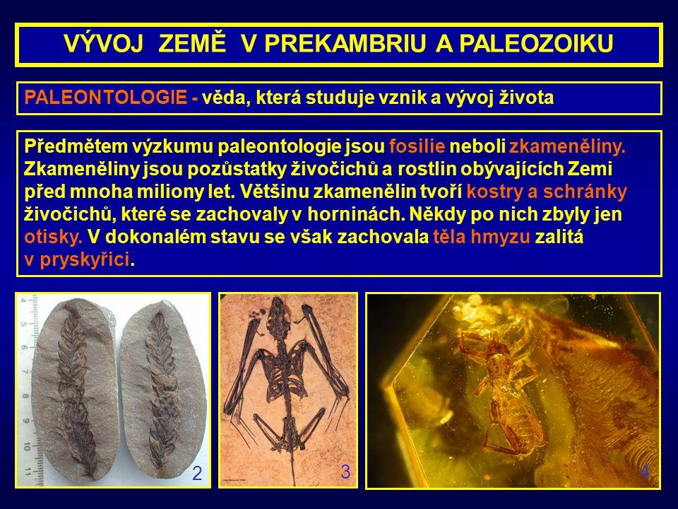 PALEONTOLOGIE - věda, která studuje vznik a vývoj života Předmětem výzkumu paleontologie jsou fosilie neboli zkameněliny. Zkameněliny jsou pozůstatky