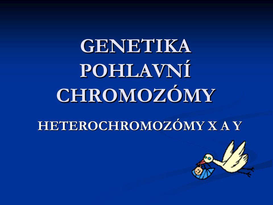 GENETIKA POHLAVNÍ CHROMOZÓMY HETEROCHROMOZÓMY X A Y