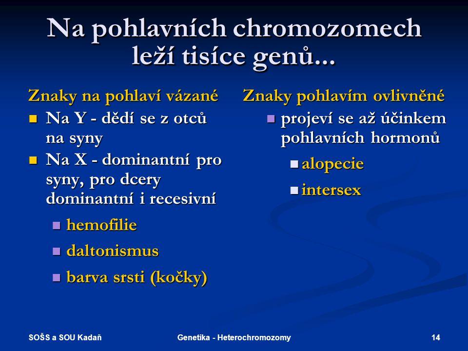 SOŠS a SOU Kadaň 14Genetika - Heterochromozomy Na pohlavních chromozomech leží tisíce genů... Znaky na pohlaví vázané Na Y - dědí se z otců na syny Na