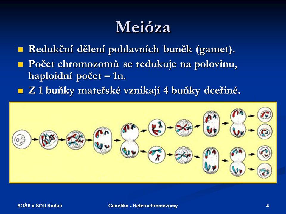 SOŠS a SOU Kadaň 5Genetika - Heterochromozomy Tvorba pohlavních buněk - gametogeneze Vznik samičích gamet – oogeneze (vajíčka) Vznik samičích gamet – oogeneze (vajíčka) Vznik samčích gamet – spermatogeneze (spermie) Vznik samčích gamet – spermatogeneze (spermie)