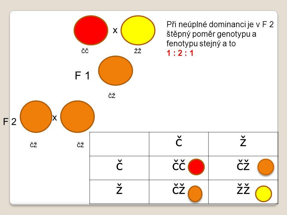 čž ččččž ž žž čč žž čž x x F 1 F 2 Při neúplné dominanci je v F 2 štěpný poměr genotypu a fenotypu stejný a to 1 : 2 : 1