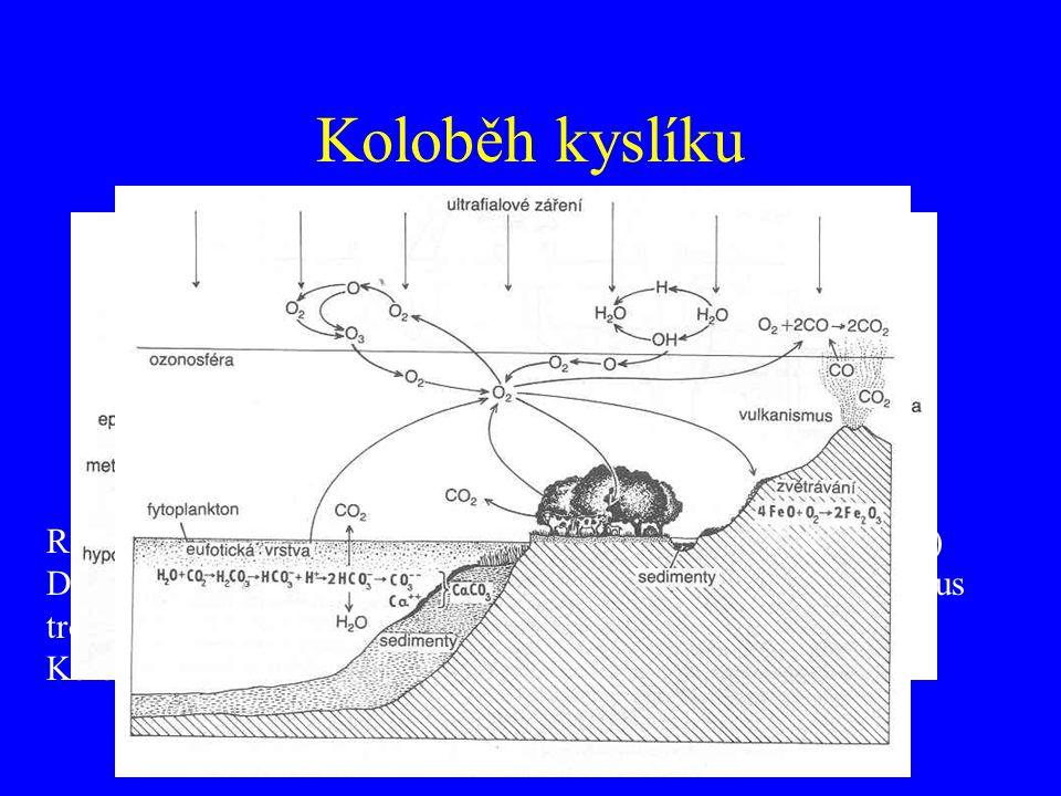 Koloběh kyslíku Rozpustnost ve vodě – teplota, tlak, plocha aj. Relativní podíl kyslíku a dusíku – 1:5 (vzduch) vers. 1:2 (voda) Distribuce O 2 ve vod
