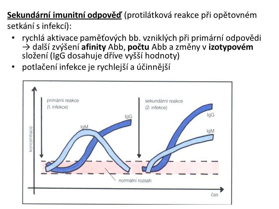 Sekundární imunitní odpověď (protilátková reakce při opětovném setkání s infekcí): rychlá aktivace paměťových bb.
