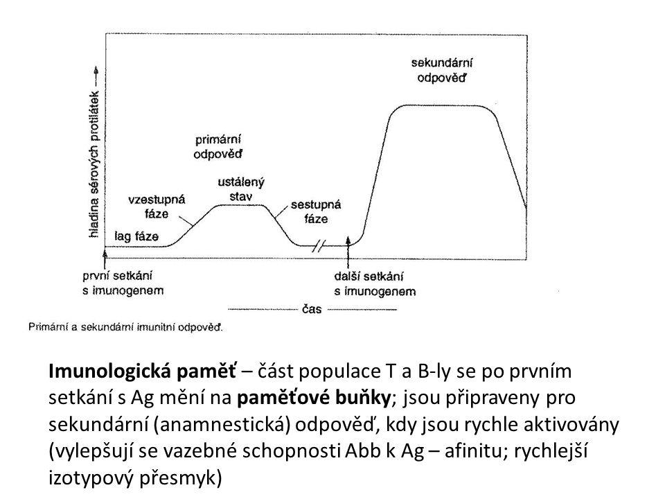 Imunologická paměť – část populace T a B-ly se po prvním setkání s Ag mění na paměťové buňky; jsou připraveny pro sekundární (anamnestická) odpověď, kdy jsou rychle aktivovány (vylepšují se vazebné schopnosti Abb k Ag – afinitu; rychlejší izotypový přesmyk)