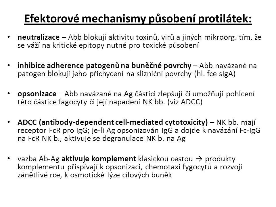 Efektorové mechanismy působení protilátek: neutralizace – Abb blokují aktivitu toxinů, virů a jiných mikroorg.