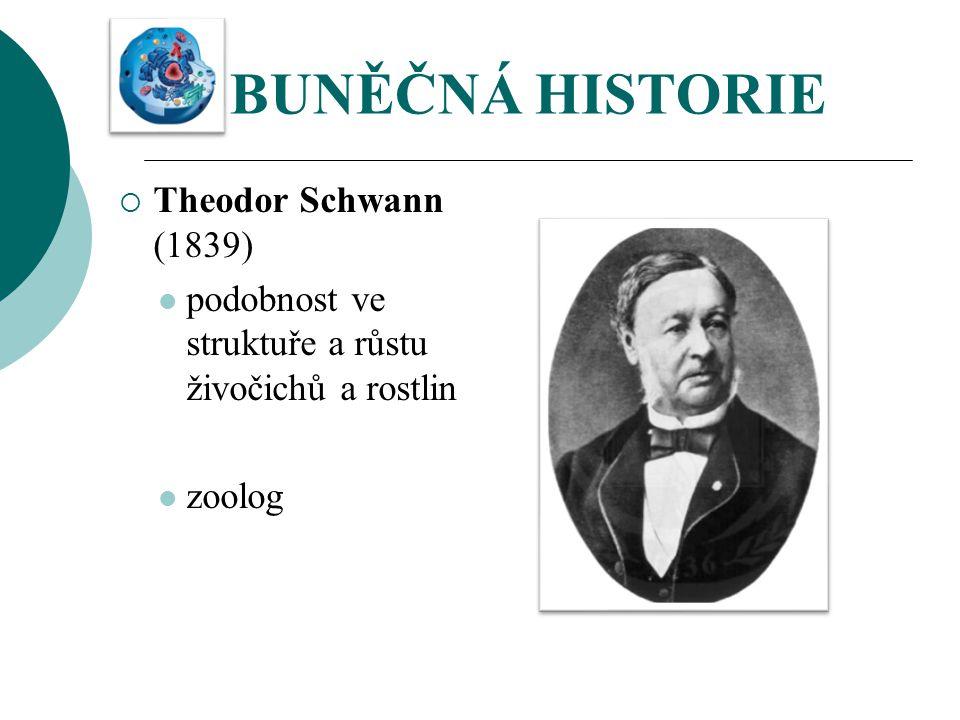 BUNĚČNÁ HISTORIE  Theodor Schwann (1839) podobnost ve struktuře a růstu živočichů a rostlin zoolog