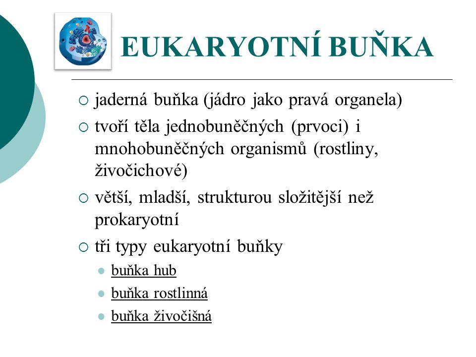 EUKARYOTNÍ BUŇKA  jaderná buňka (jádro jako pravá organela)  tvoří těla jednobuněčných (prvoci) i mnohobuněčných organismů (rostliny, živočichové) 