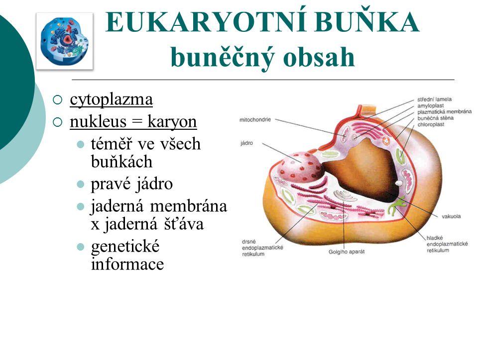 EUKARYOTNÍ BUŇKA buněčný obsah  cytoplazma  nukleus = karyon téměř ve všech buňkách pravé jádro jaderná membrána x jaderná šťáva genetické informace