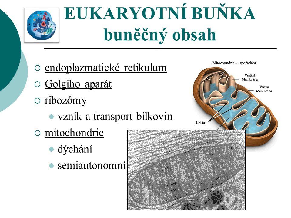 EUKARYOTNÍ BUŇKA buněčný obsah  endoplazmatické retikulum  Golgiho aparát  ribozómy vznik a transport bílkovin  mitochondrie dýchání semiautonomní