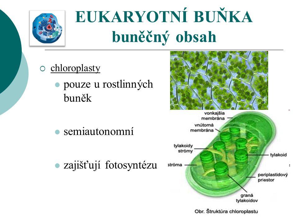 EUKARYOTNÍ BUŇKA buněčný obsah  chloroplasty pouze u rostlinných buněk semiautonomní zajišťují fotosyntézu