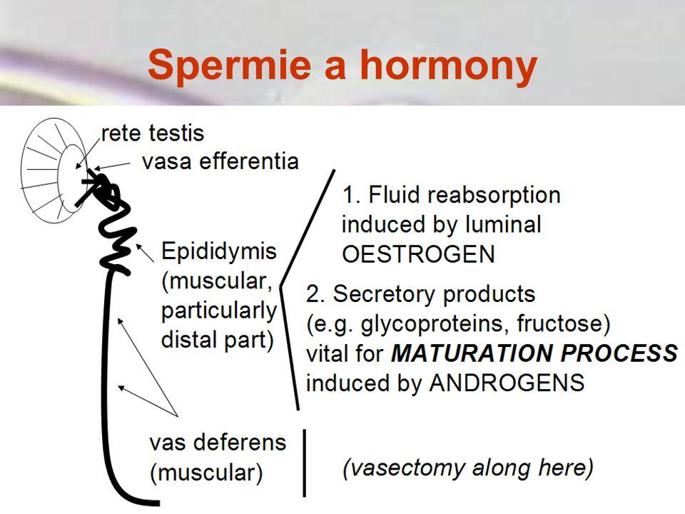 Spermie a hormony