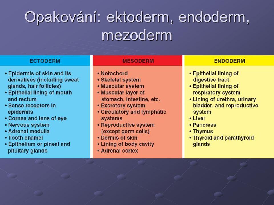 Opakování: ektoderm, endoderm, mezoderm