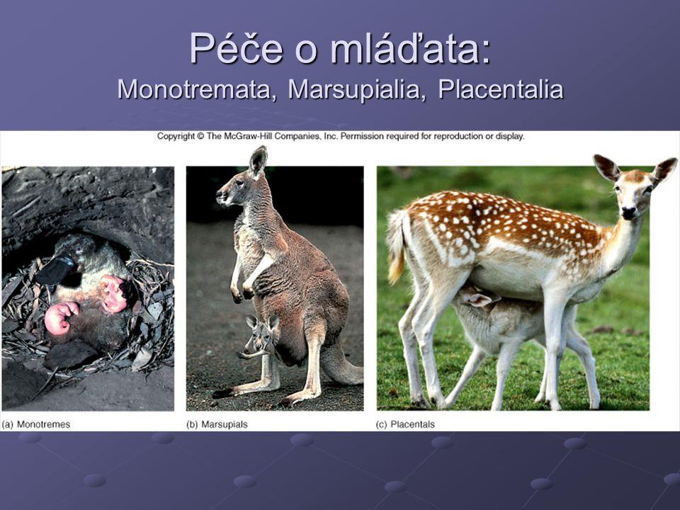 Péče o mláďata: Monotremata, Marsupialia, Placentalia