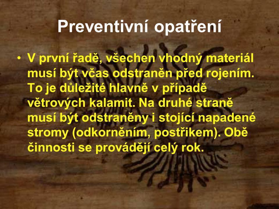Preventivní opatření V první řadě, všechen vhodný materiál musí být včas odstraněn před rojením. To je důležité hlavně v případě větrových kalamit. Na