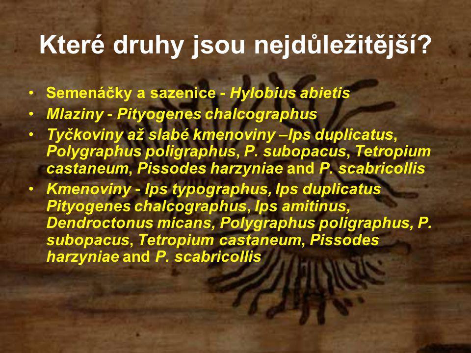 Které druhy jsou nejdůležitější? Semenáčky a sazenice - Hylobius abietis Mlaziny - Pityogenes chalcographus Tyčkoviny až slabé kmenoviny –Ips duplicat